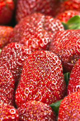 Group of ripe strawberries arranged
