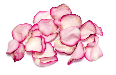 Close up of withered rose and petal over white background