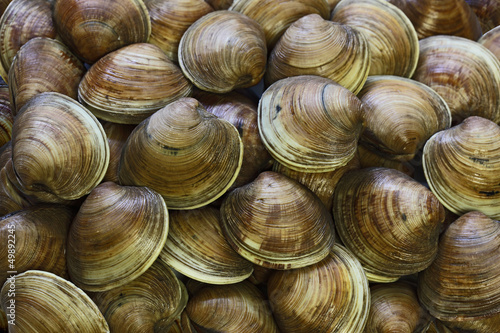 Clams Background