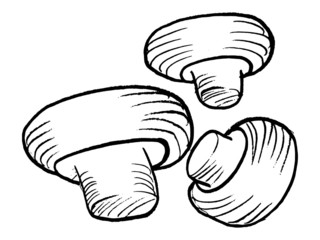hand drawn, vector illustration of the champignons
