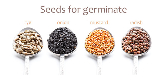 Seeds for germination