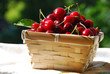 First cherries in a wicker basket