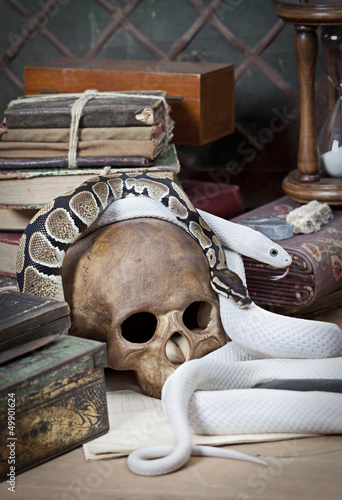 Two snakes with human skull