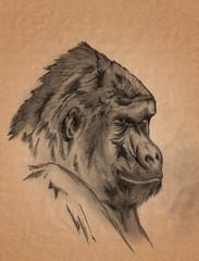 gorilla monkey portrait - freehand sepia toned pencil drawing