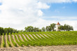 vineyard with windmill near Ribagnac, Dordogne Department, Aquit