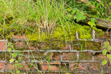 Moss and weed covered crumbling wall background