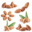 Collection of almond nuts with leaves isolated on white