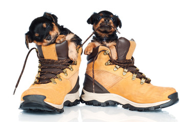 two adorable puppies in boots