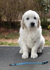 perros de Eli