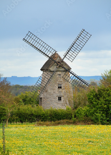 English Windmill behind a field of yellow flowers