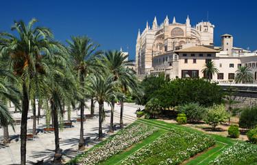 Palma de Mallorca - Palmen und Kathedrale