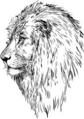 profile of a lion