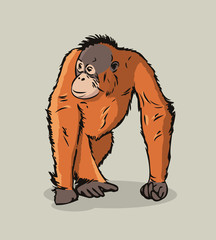 Cartoon Orangutan ape
