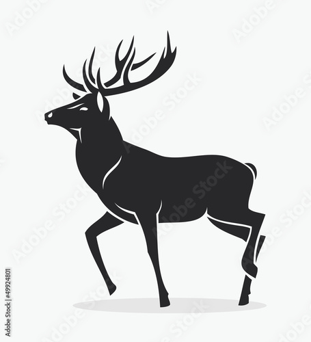 Isolated deer