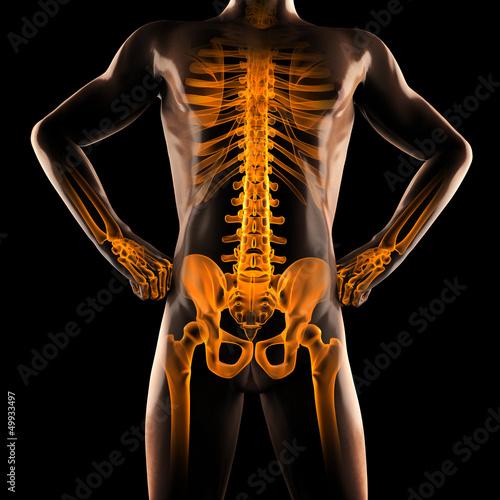 human radiography scan