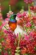 canvas print picture - Kolibri auf Ast
