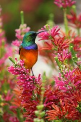 Kolibri auf Ast