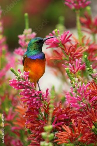 canvas print picture Kolibri auf Ast
