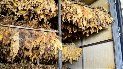 Dry tobacco leaf in stove factory