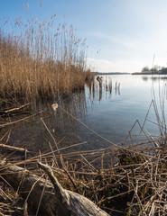 Fringe of reeds