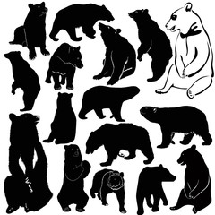 Bears white brown animals