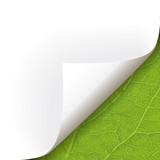 Papier Ecke Pflanze rechts unten