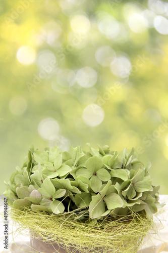 grüne hortensien und bokeh