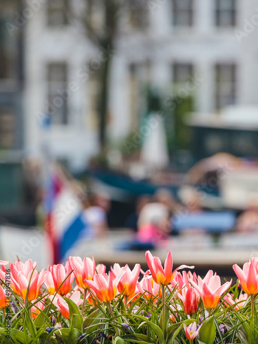 Tulips in front of an Amsterdam canal