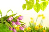 Fototapety tulpen natur