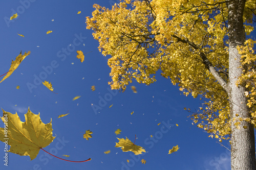 canvas print picture herbststurm