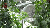ventilation in the greenhouse