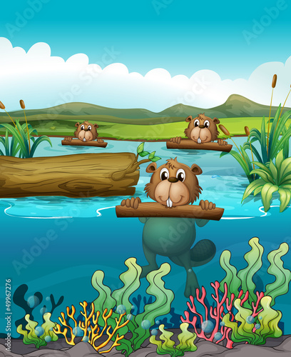 Foto op Plexiglas Onderzeeer Three beavers in the river