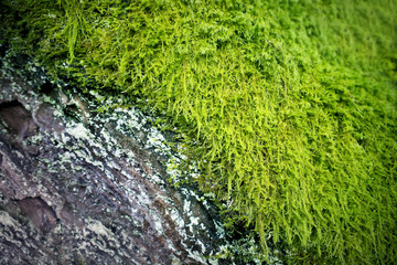 Rustic Old Bark & Green Moss