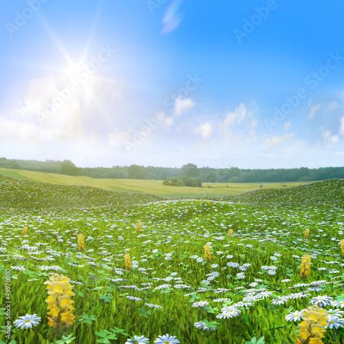Fototapeten,wiese,butterblümchen,kleeblatt,kleeblatt