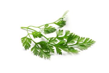 Herbs Series - Chervil