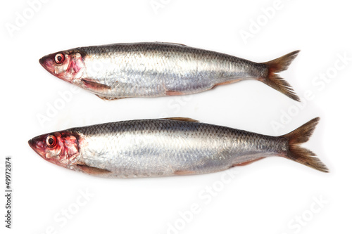 Fresh herrings isolated on a white studio background.