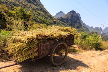 Harvest on a chariot near the road side