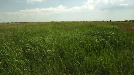 Dense grass declined under a wind against