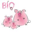 Bio - Schwein - Wurst - Fleisch - Gesundes Essen
