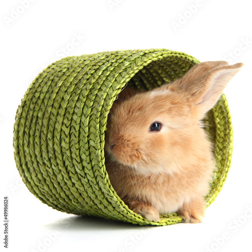 Fluffy foxy rabbit in wicker basket isolated on white
