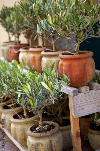 Tuinposter Olijfboom Olivier, provence, sud, arbre, pot, jardin, plante, olive