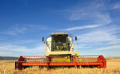 Combine harvesting wheat with blue sky