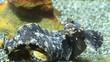 sea bottom fish