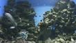 aquarium with Moray Eels