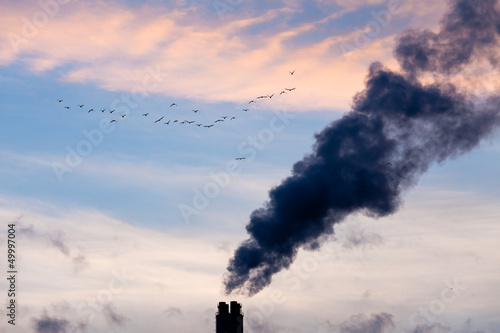 Industrial pollution chimneys and wildlife concept