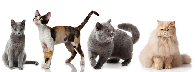 Collection of a cats isolated over white background.