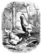 Cock & Hen - Coq & Poule