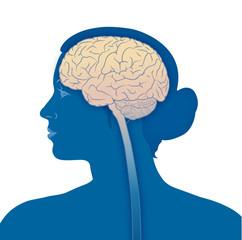 Frauenkopf und Gehirn