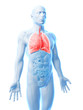 3d rendered illustration of a male´s lung