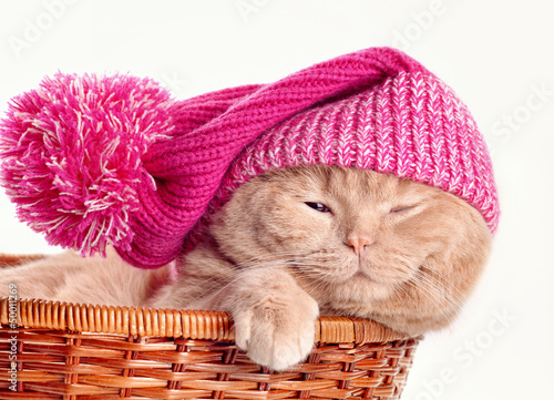 Cat wearing knit hat sleeping in a basket